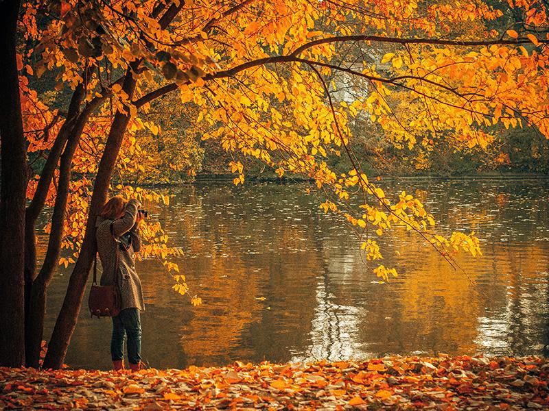 Efterårsblade sæsonskift
