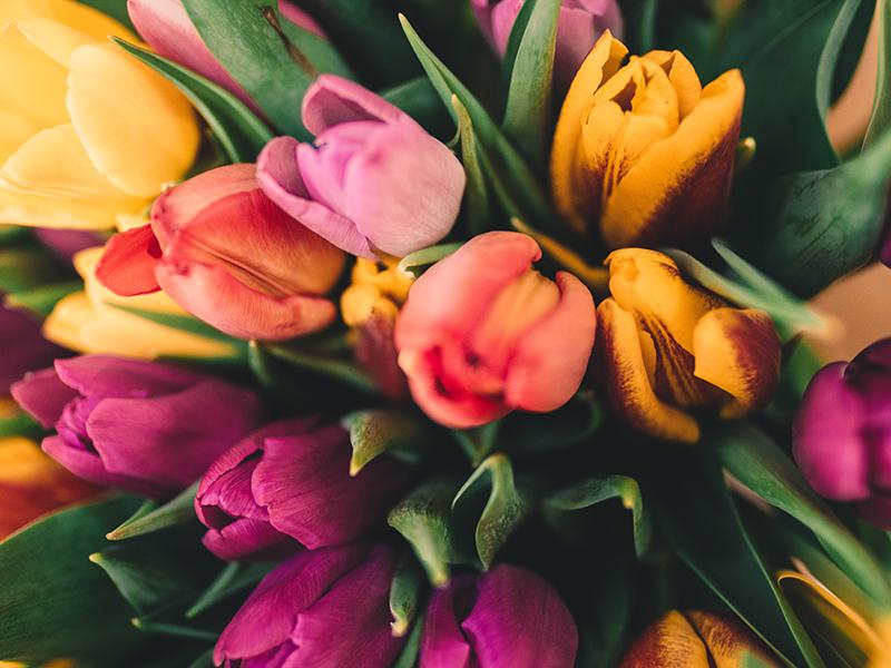 blomster tulipaner forår