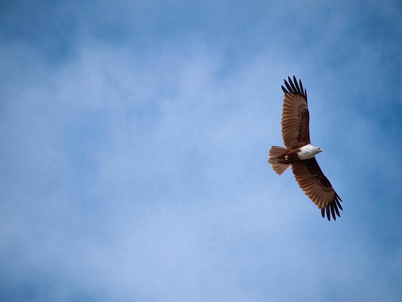 fri flyver fugl